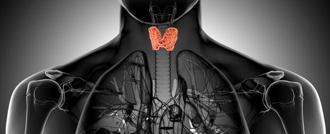 thyroid-gland-xray-e1418297194674-669x272.jpg (669×272)